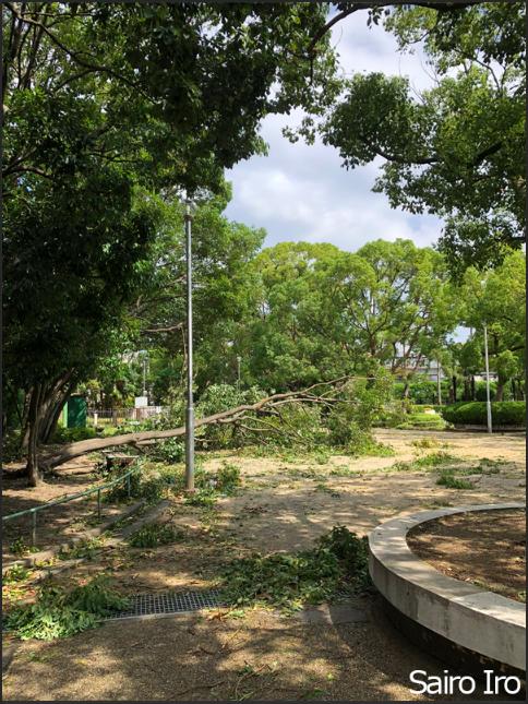 台風通過後の公園へ。樹がなぎ倒されている