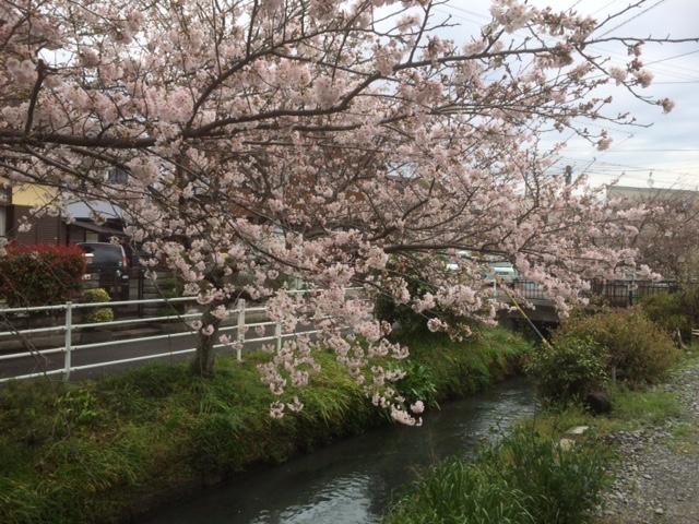 f:id:saitoh_naoki:20170519132310j:plain
