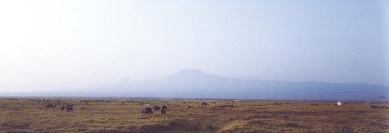 アンボセリ国定公園から望むキリマンジャロ