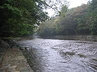 伊勢神宮の御手洗場がある五十鈴川。赤福の波形はこの川の流れを模したとか。なんともおそれ多い話