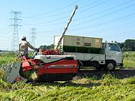コメの収穫作業(茨城県)