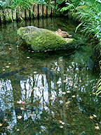 真姿の池にて