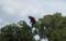 太宰府天満宮、猿回しのサル