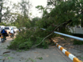 [lao]街灯も倒れかかってきた樹木の重みで倒れたみたい