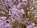 [china]この紫の花はなに?