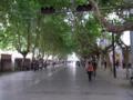 [china]正義路、街路樹の心地よい歩行者天国
