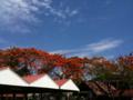 [lao]雨の降った翌日、美しい赤と青のコントラスト