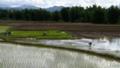 [lao]ちょうど田植えの季節