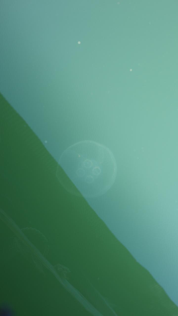f:id:sakaesukemura:20200420130129j:plain