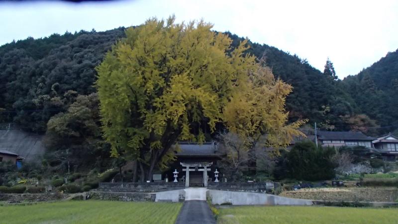 f:id:sakasakingyo1958:20131130070609j:image:w640
