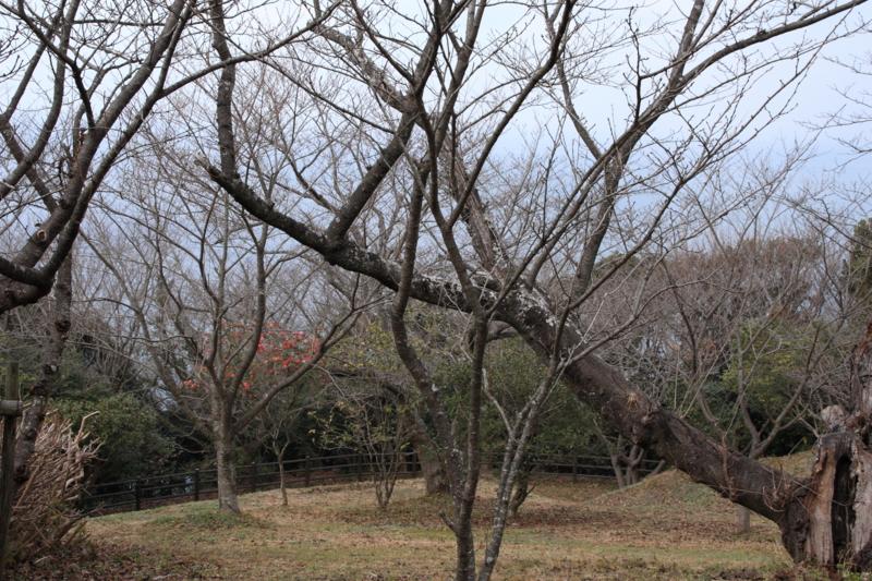 f:id:sakasakingyo1958:20140122124800j:image:w640