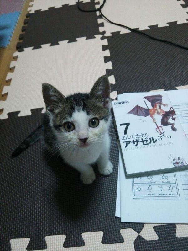 f:id:sakasakingyo1958:20160906221014j:image:w480