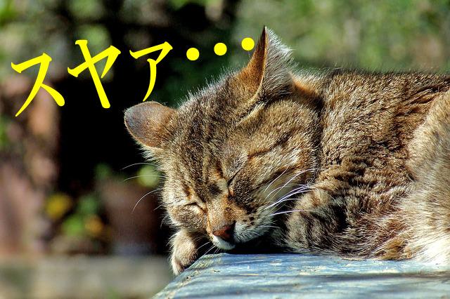 f:id:sakatsu_kana:20161223084117j:plain