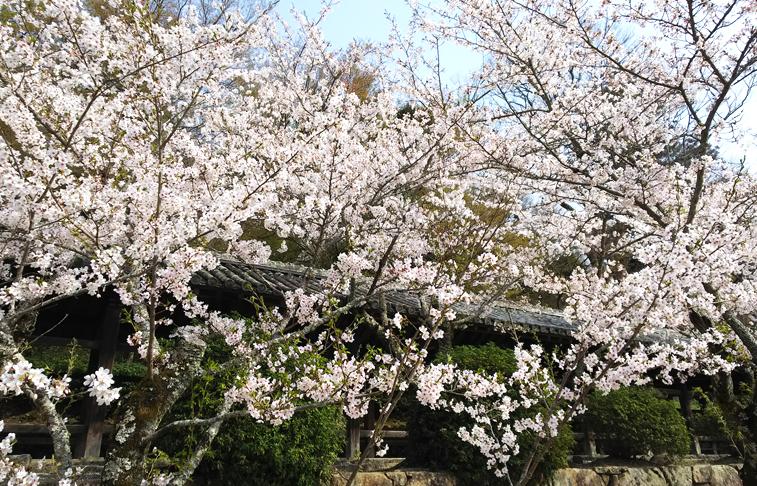 f:id:sakatsu_kana:20180402124921j:plain
