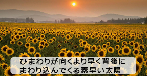 f:id:sakatsu_kana:20180723184003j:plain