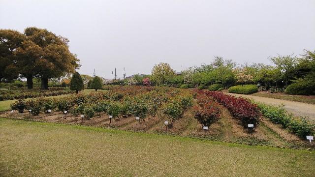 f:id:sakatsu_kana:20200426102415j:image
