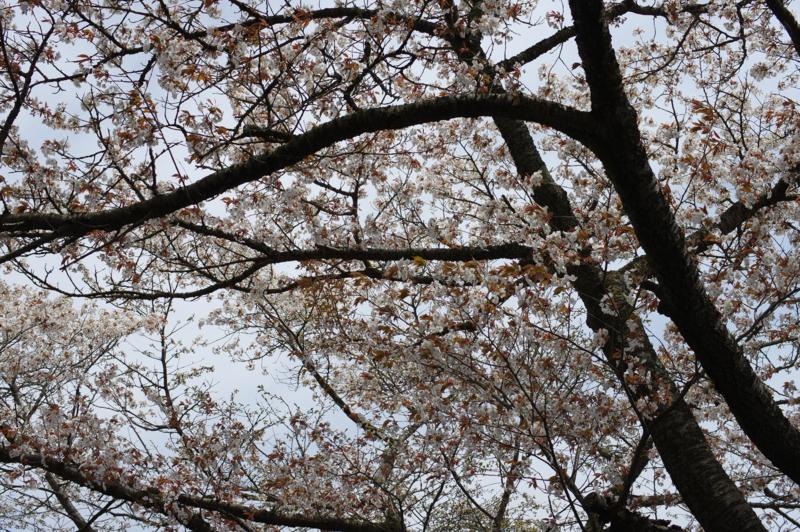 f:id:sakemaro:20150422211240j:plain