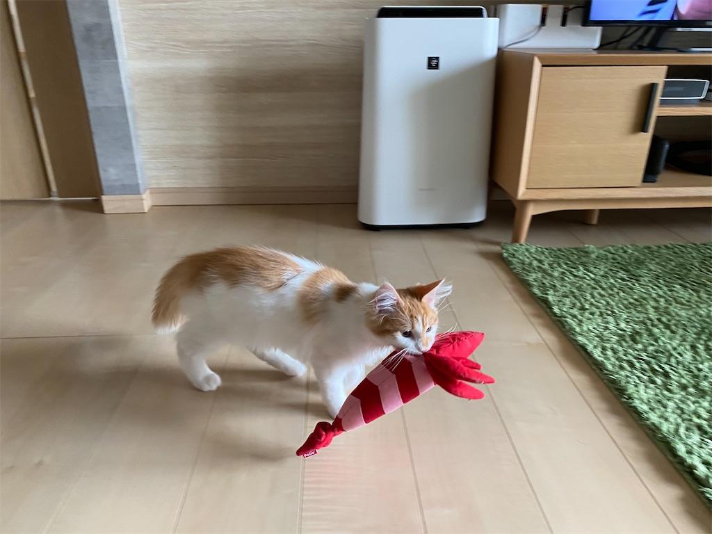 f:id:sakeroomba:20210601213649j:image