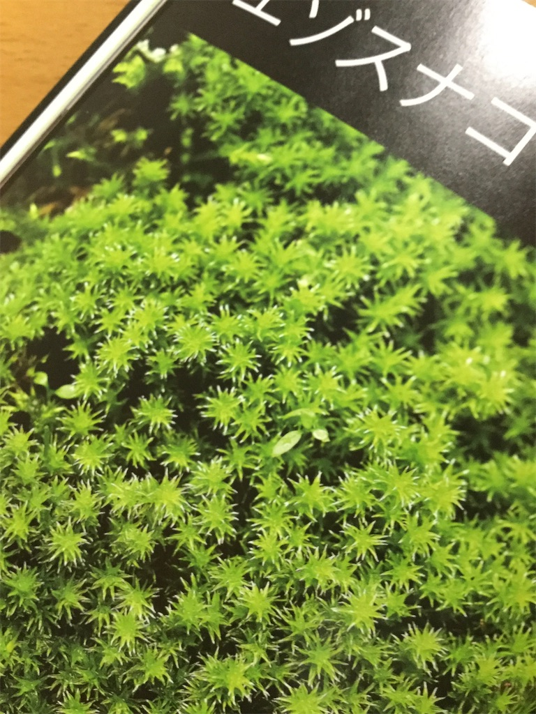 f:id:saki-compass:20200810172314j:image