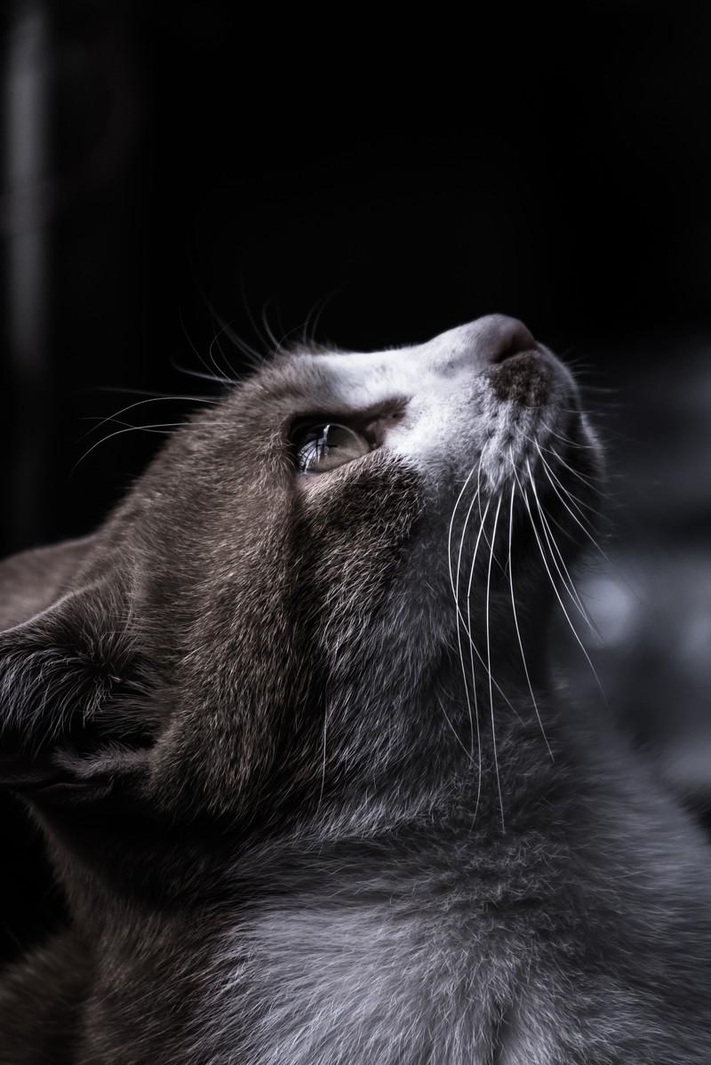 飼い主との別れに猫が思うこと