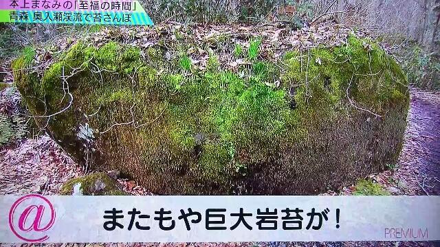 f:id:saki_mass13:20170619192612j:image