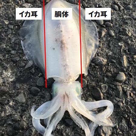 f:id:sakigake3:20190521232452p:plain