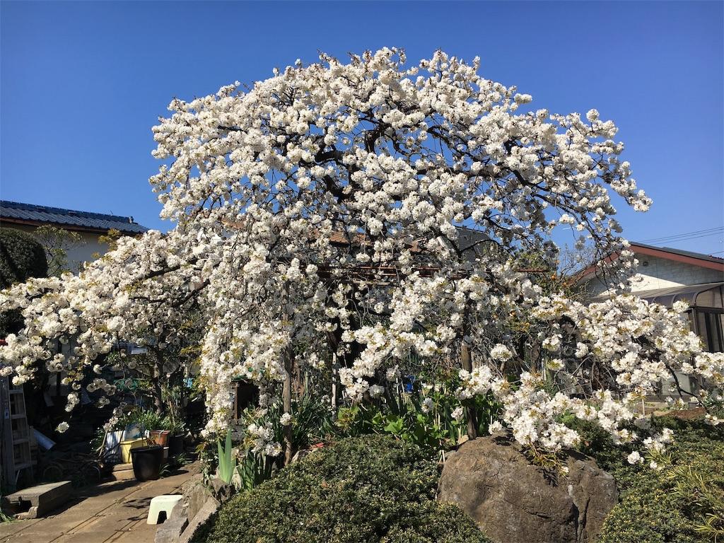 f:id:sakiiro:20190402191720j:image