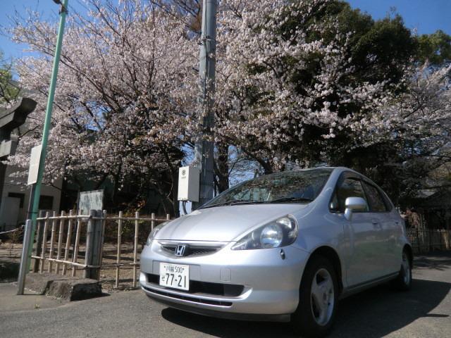 神社の桜とフィット