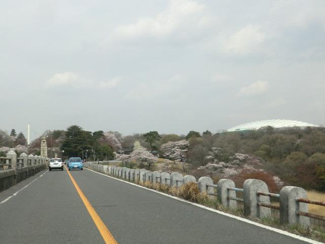 西武ドームと桜