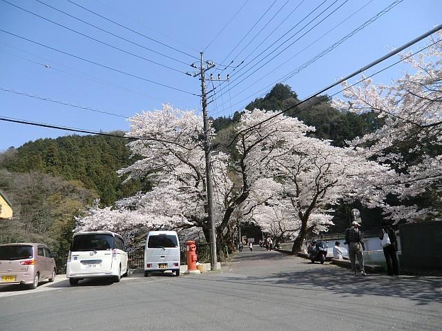 110414飯能の桜ドライブ
