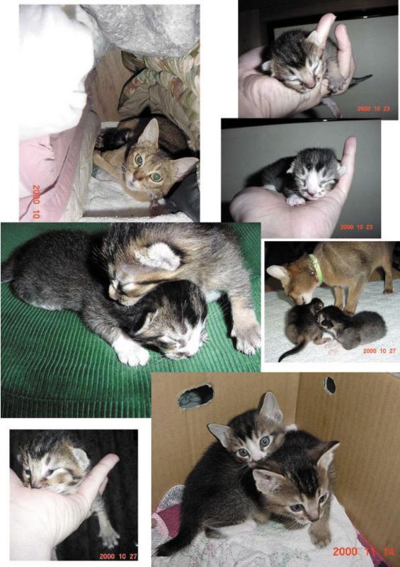 2010年子猫誕生