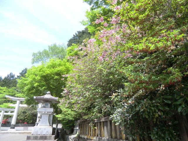 110525三峰神社参拝