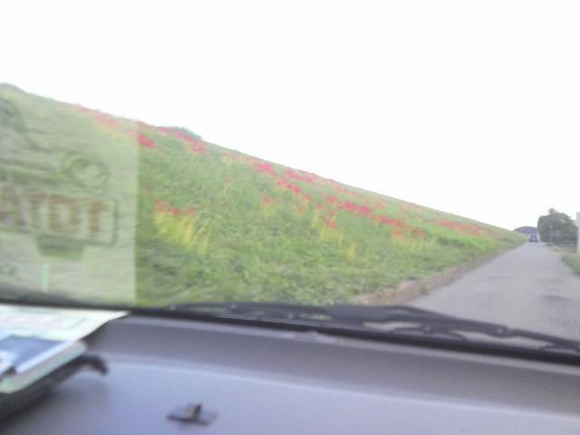 100925荒川土手の彼岸花