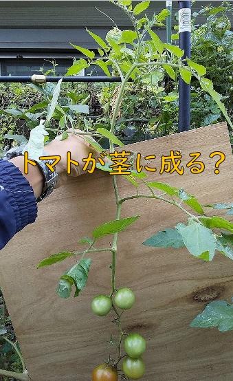 f:id:sakikaku2009:20191101211051j:plain