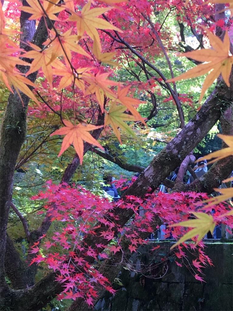 f:id:sakiko2002:20161113210811j:image