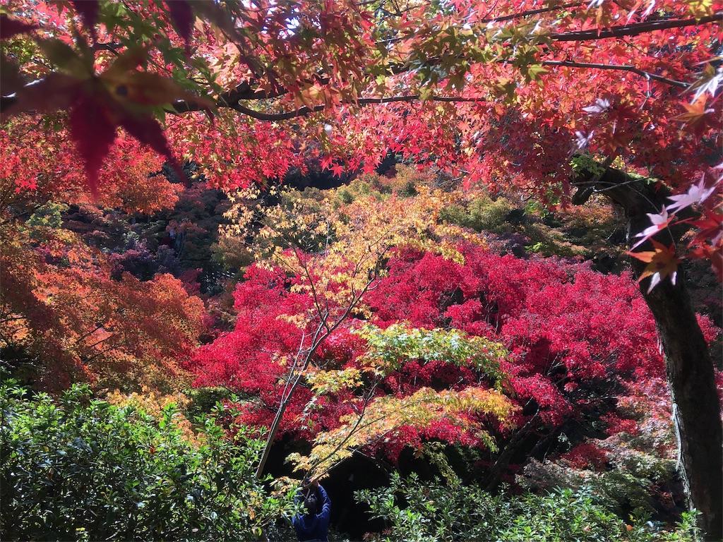 f:id:sakiko2002:20161113210832j:image