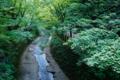 京都新聞写真コンテスト  深緑