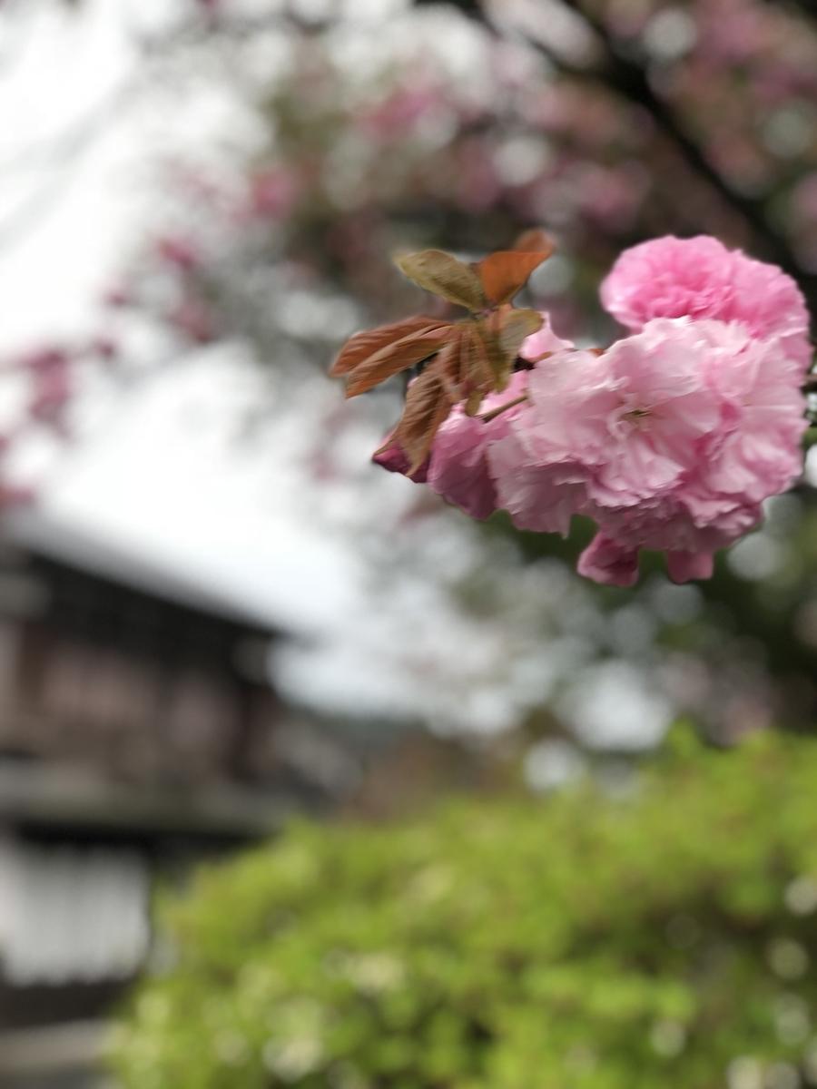f:id:saku-haru-sati:20190417090122j:plain