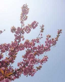 f:id:saku-luce:20200430182912j:image