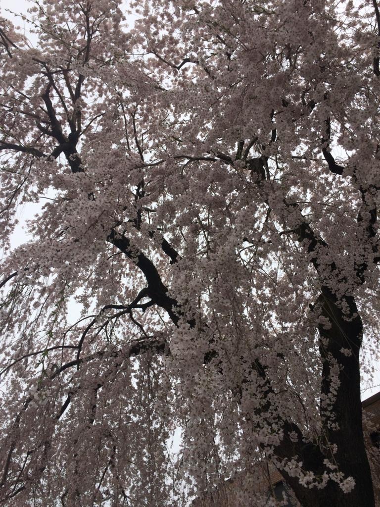 f:id:saku-suke:20170502233021j:plain