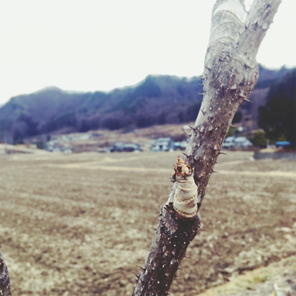 f:id:sakuhodekurasu:20190208231529j:image
