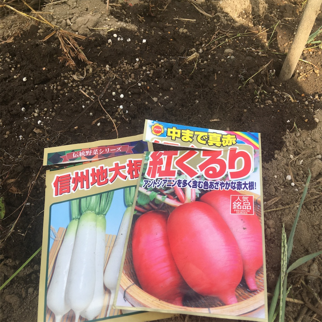 f:id:sakuhodekurasu:20200906141529j:image