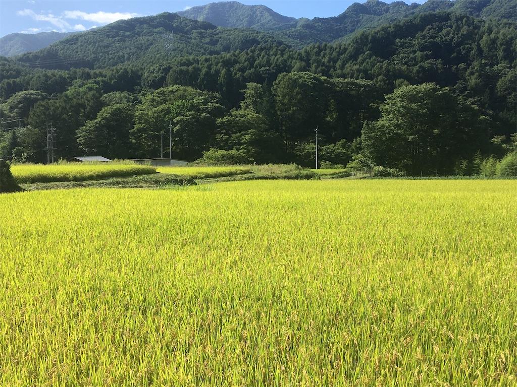f:id:sakuhodekurasu:20200909184626j:image