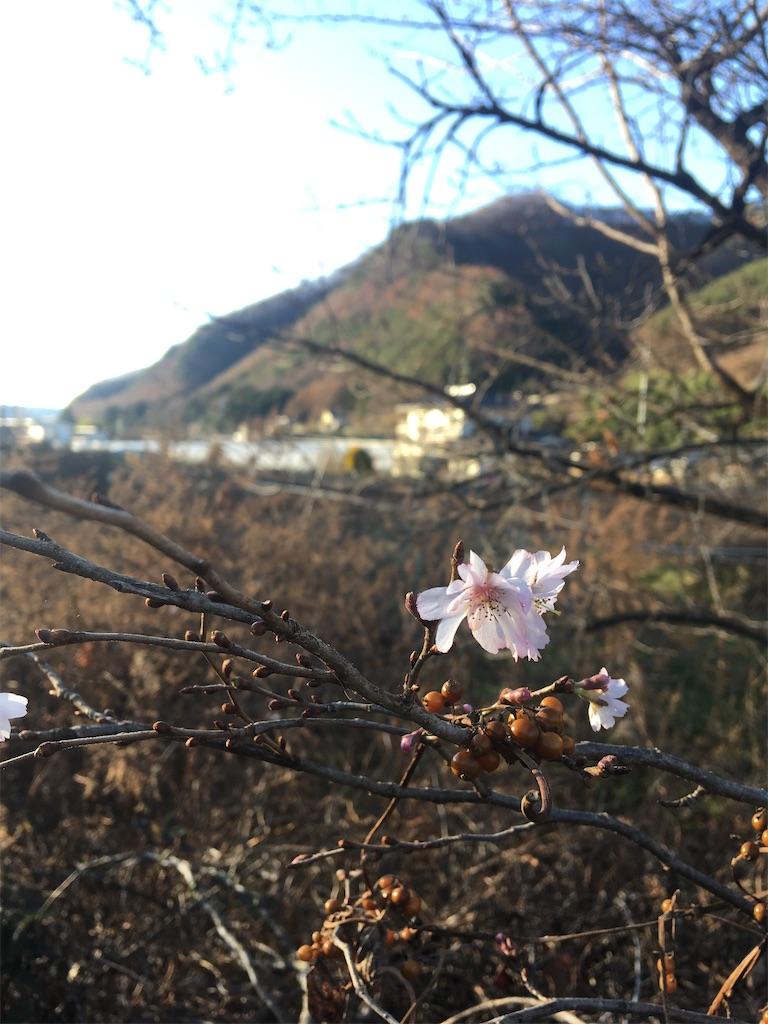 f:id:sakuhodekurasu:20201121174337j:image