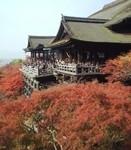 紅葉の清水焼