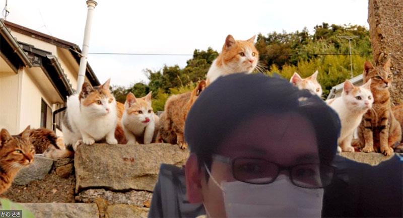 Zoomのバーチャル背景を猫にする