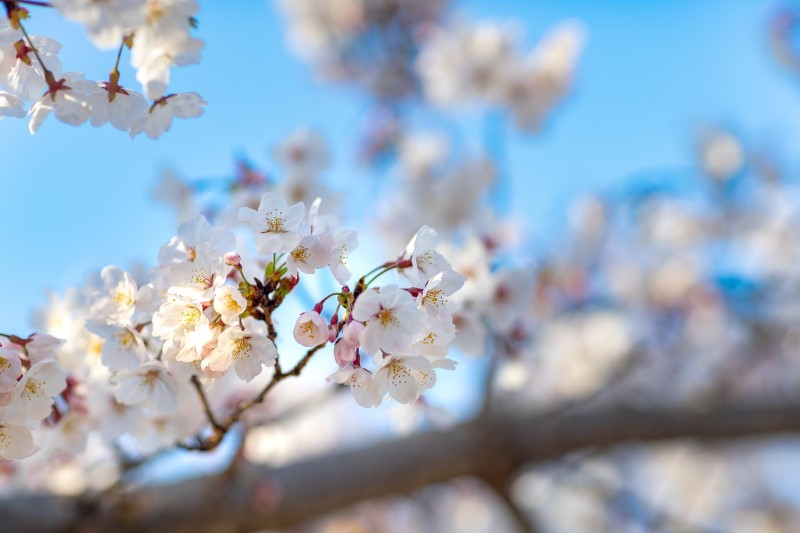 """環境が変わるこの春、""""立ち止まる勇気""""を持ってほしい【適応障害にならないために】"""