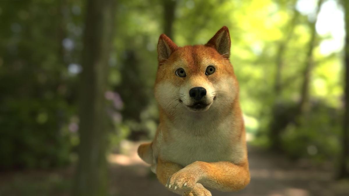 柴犬in森