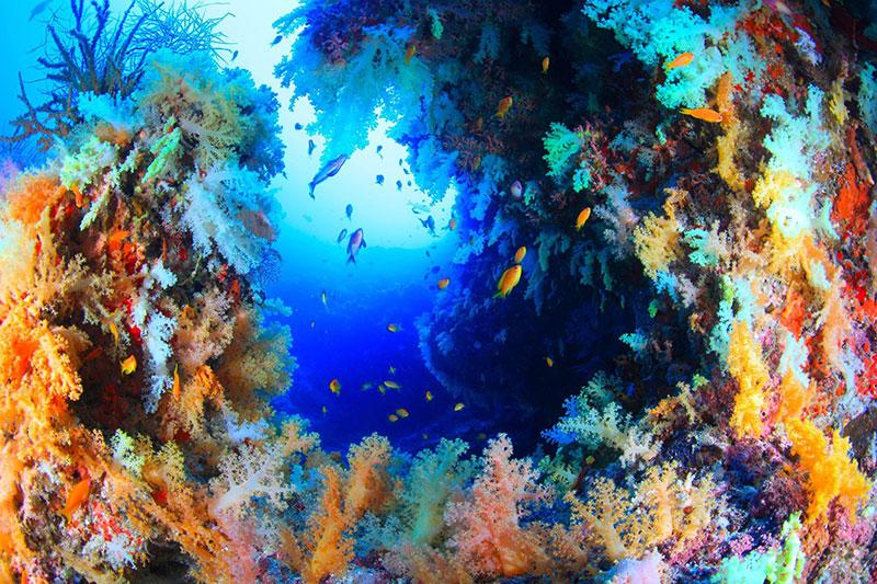 カラフルなソフトコーラルが海底を彩るモルディブの海