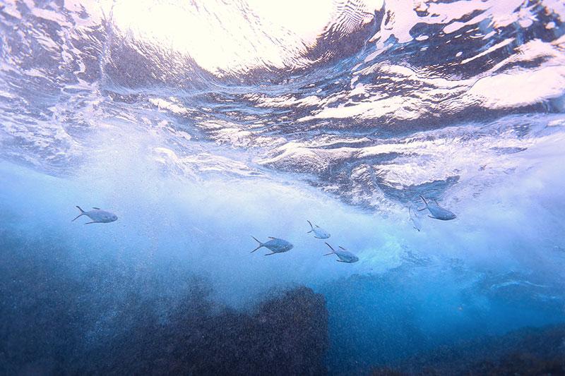 SUPや海水浴客で賑わう葉山の海は、海の生き物たちの生命で溢れている。
